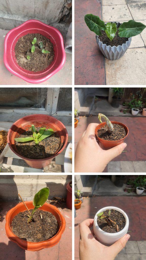 May Wrap Up highlight: plant propagation